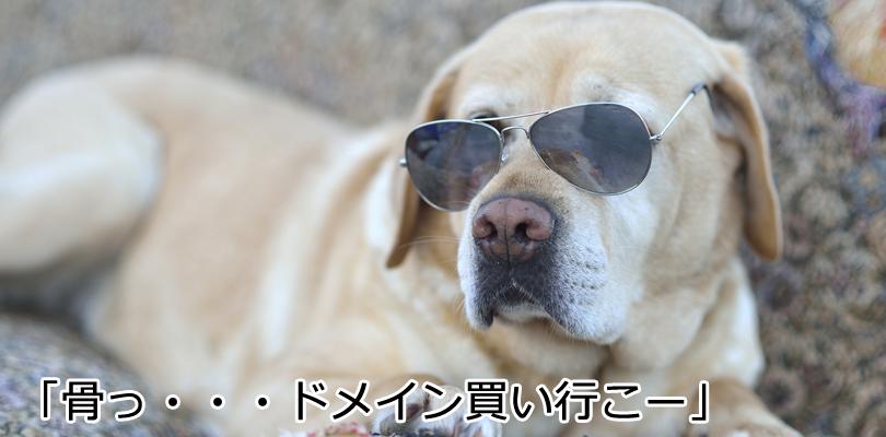 日本語ドメインの方が上位表示有利