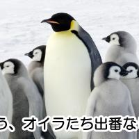 ペンギンアップデートは継続的に行われる