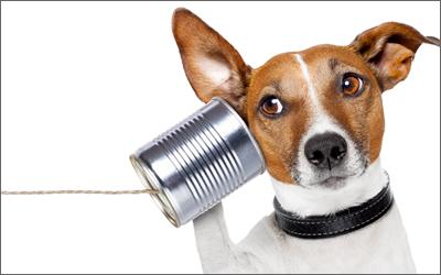 糸電話のイヌ
